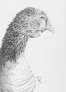 Farm Sanctuary Goose