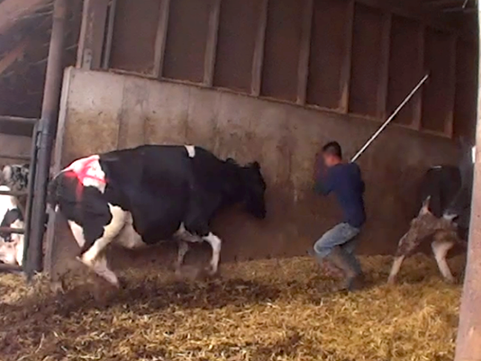 Dairy Owner Caught In Prostition Ring