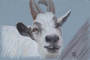 2011-11-08 Pastel Goat
